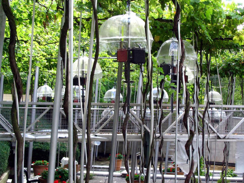 Photographie : coupelles-parapluie avec barres métalliques et boitiers sous un couvert végétal
